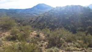 Arizona 4