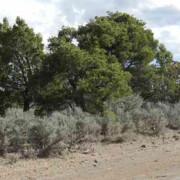 small trees 1