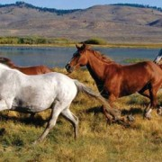 wild_horses2.png